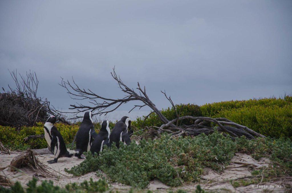 Vögel in Südafrika