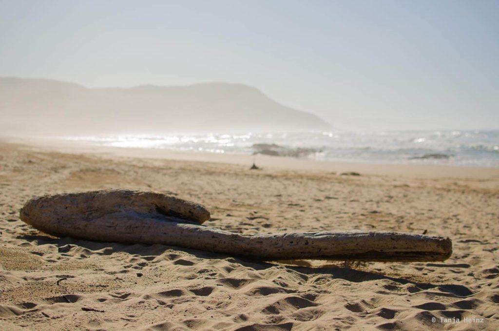Haie in Südafrika