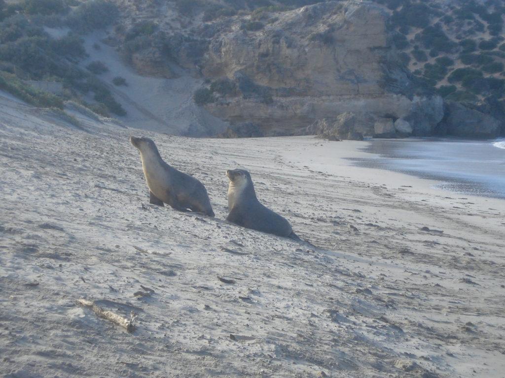 Kangaroo Island in Australien