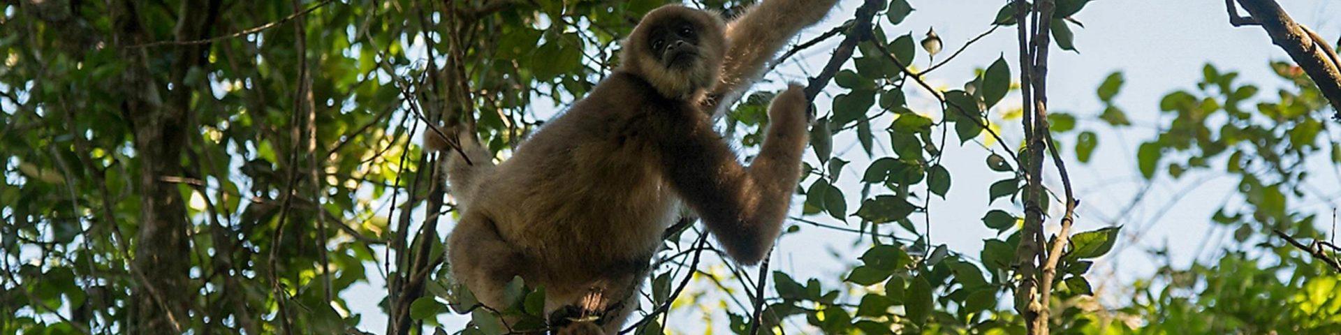 Primaten