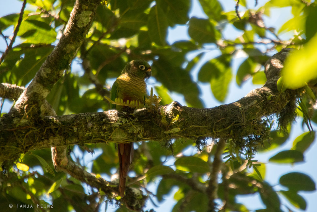Brasiliens Vogelwelt