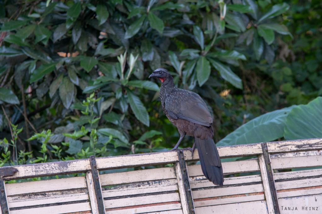 Vogelwelt Brasiliens