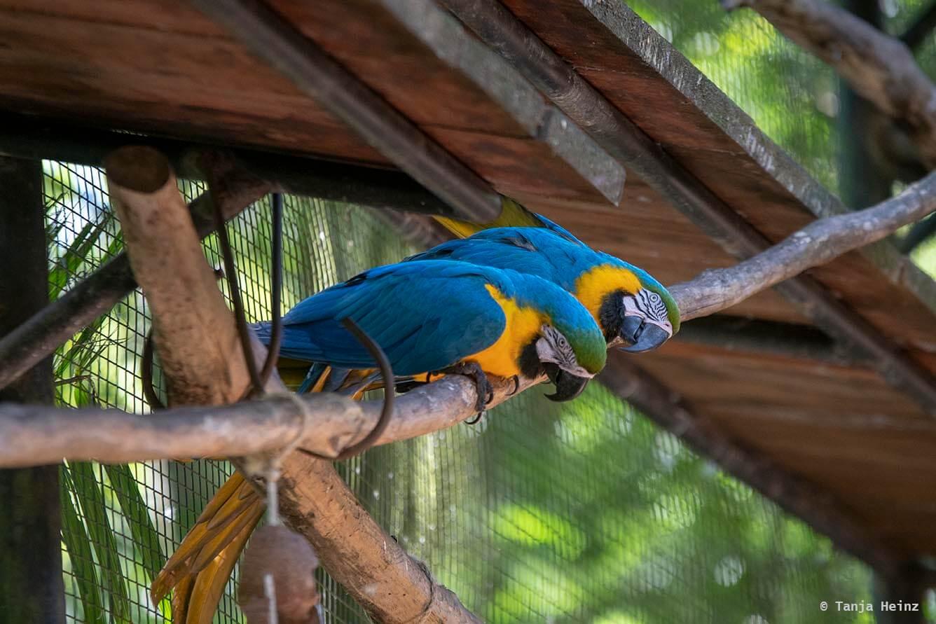 bird-park-parque-das-aves