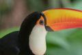 Vogelpark-parque-das-aves
