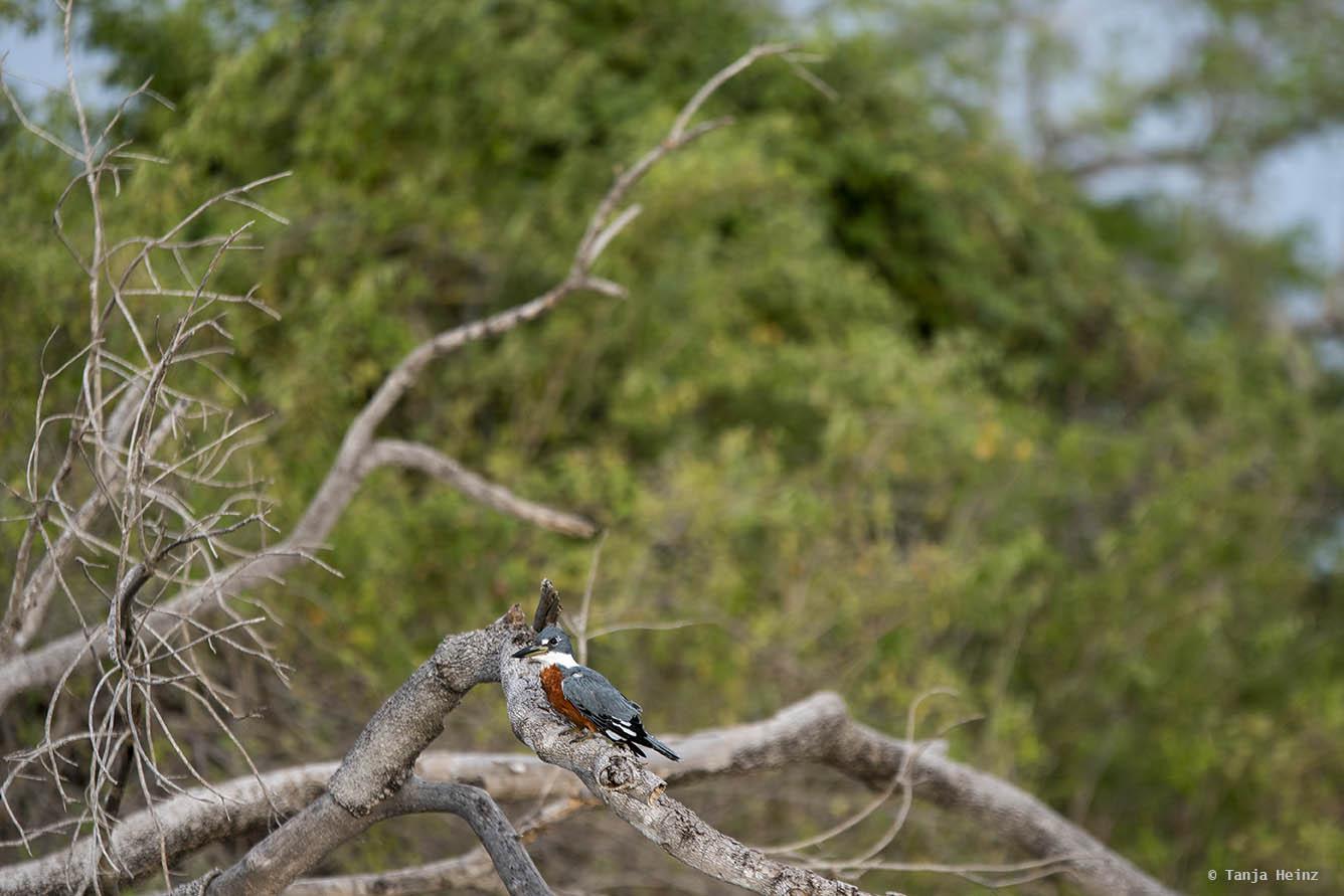 Pantanal-Brazil