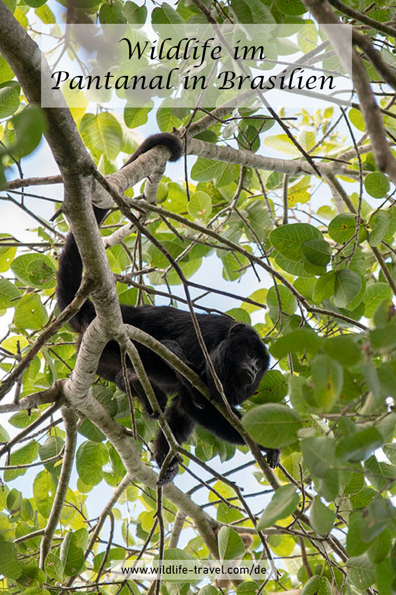 Pantanal-Brasilien