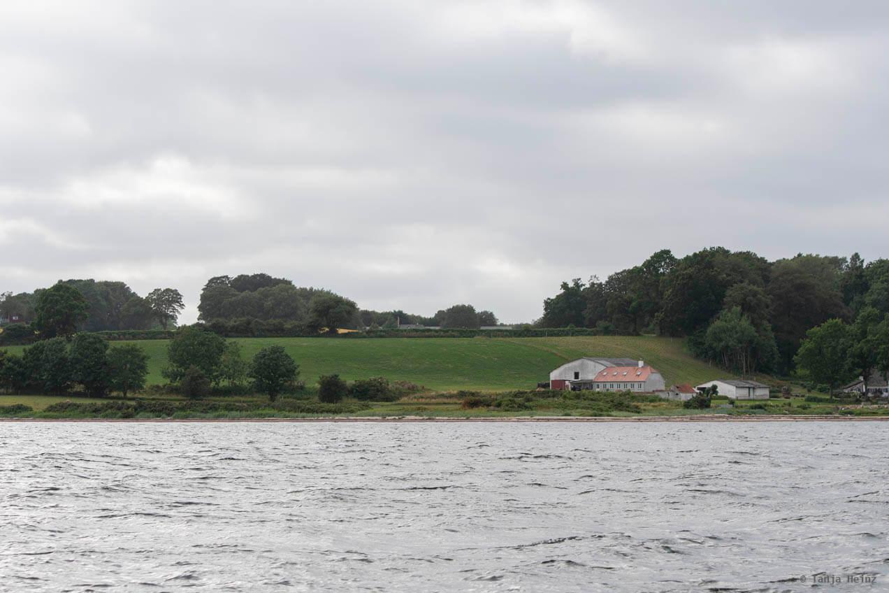 Schweinswale in der Flensburger Förde