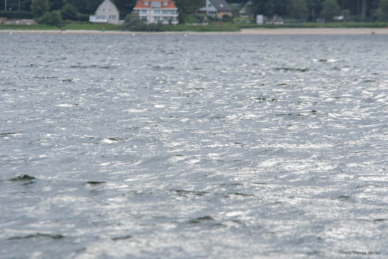 Schweinswale unter Wasser