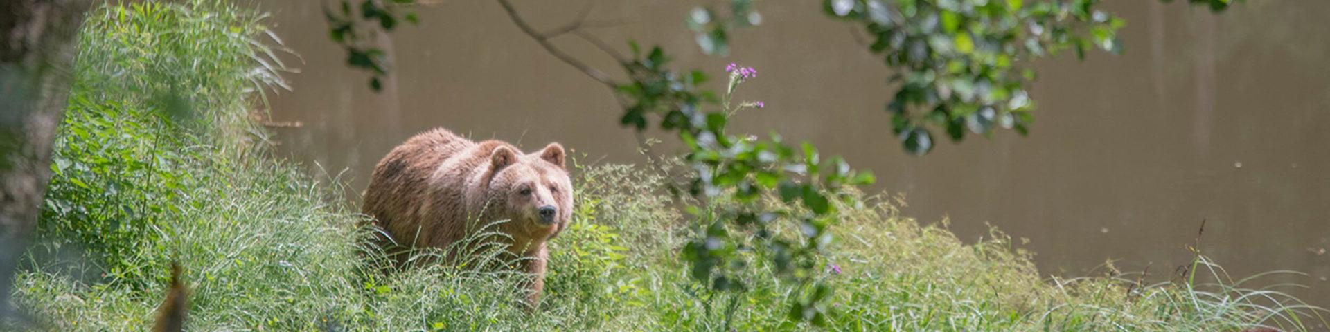 bear-sanctuary