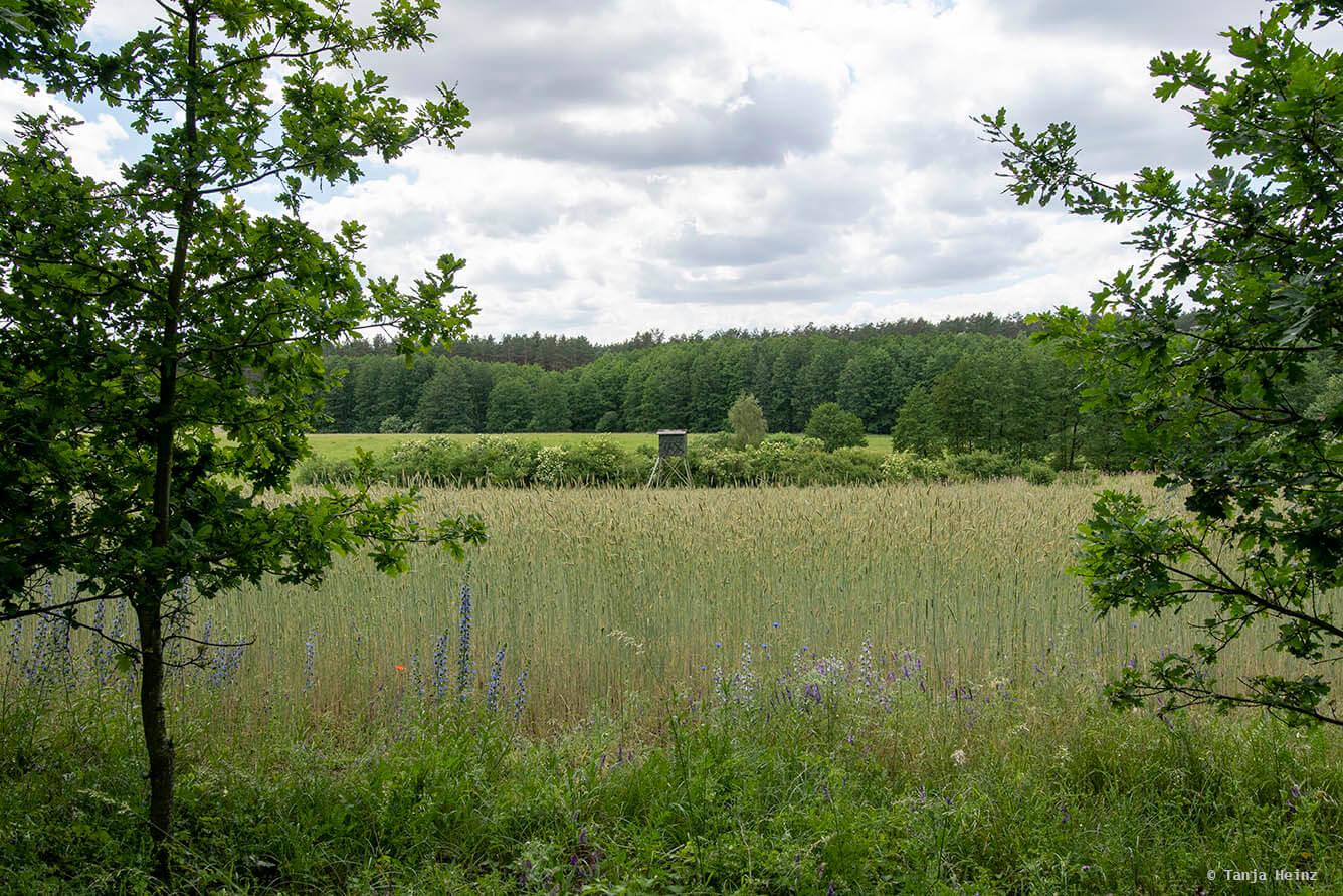landscape close to the bear sanctuary
