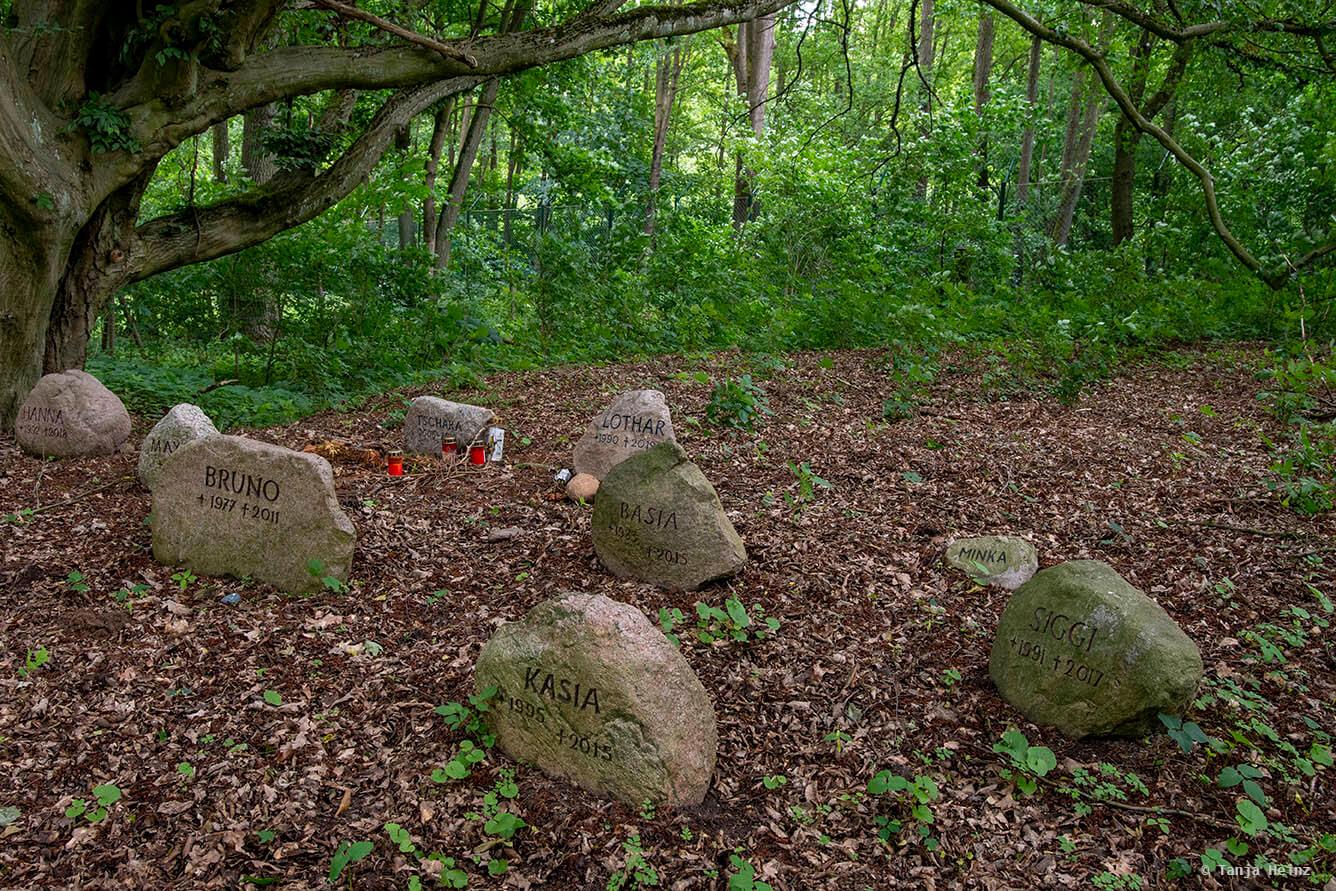 bear cemetery