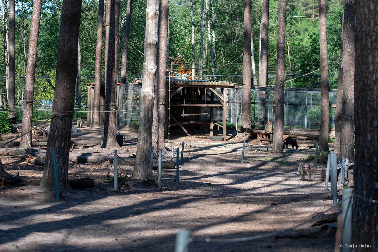 Fressregion im Affenwald
