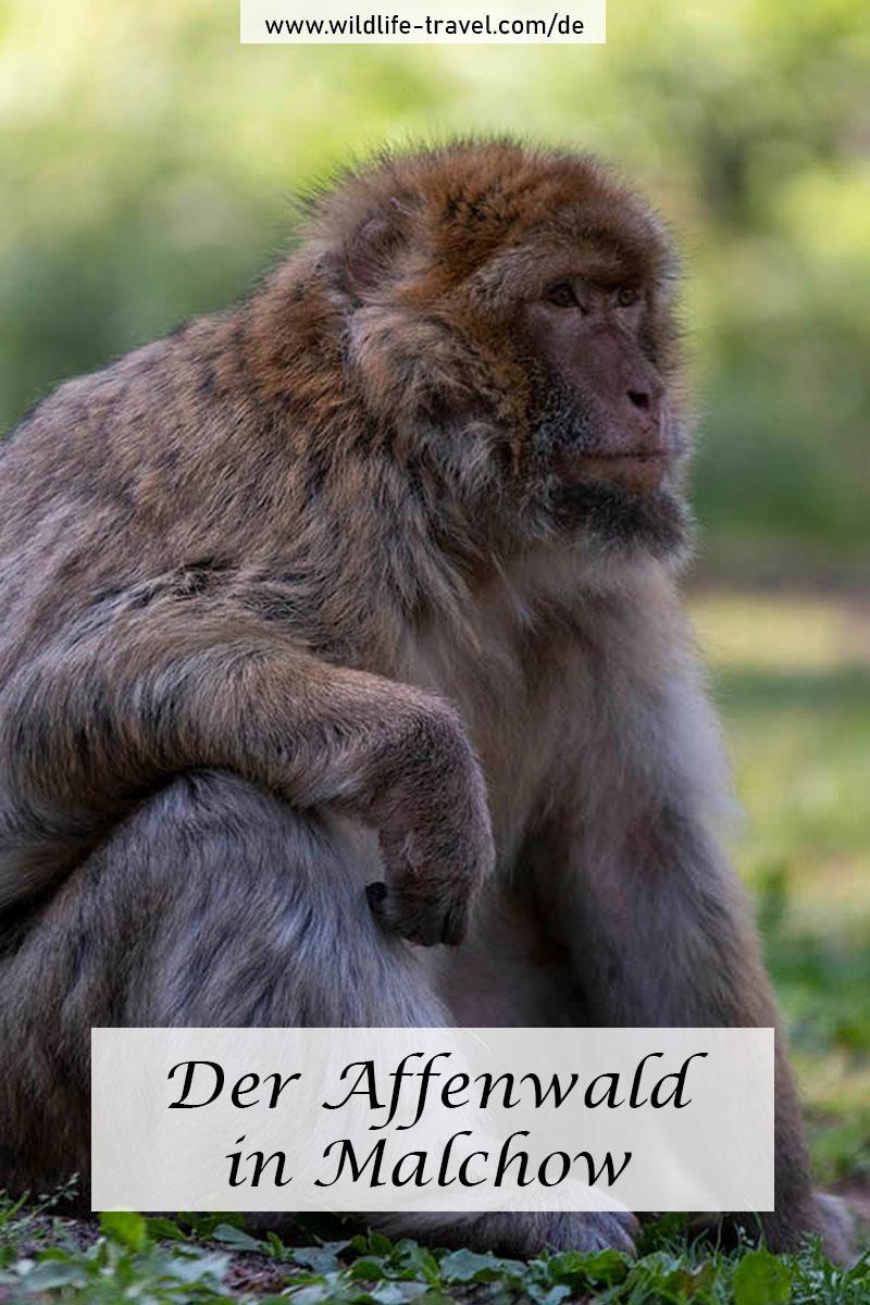 Affenwald