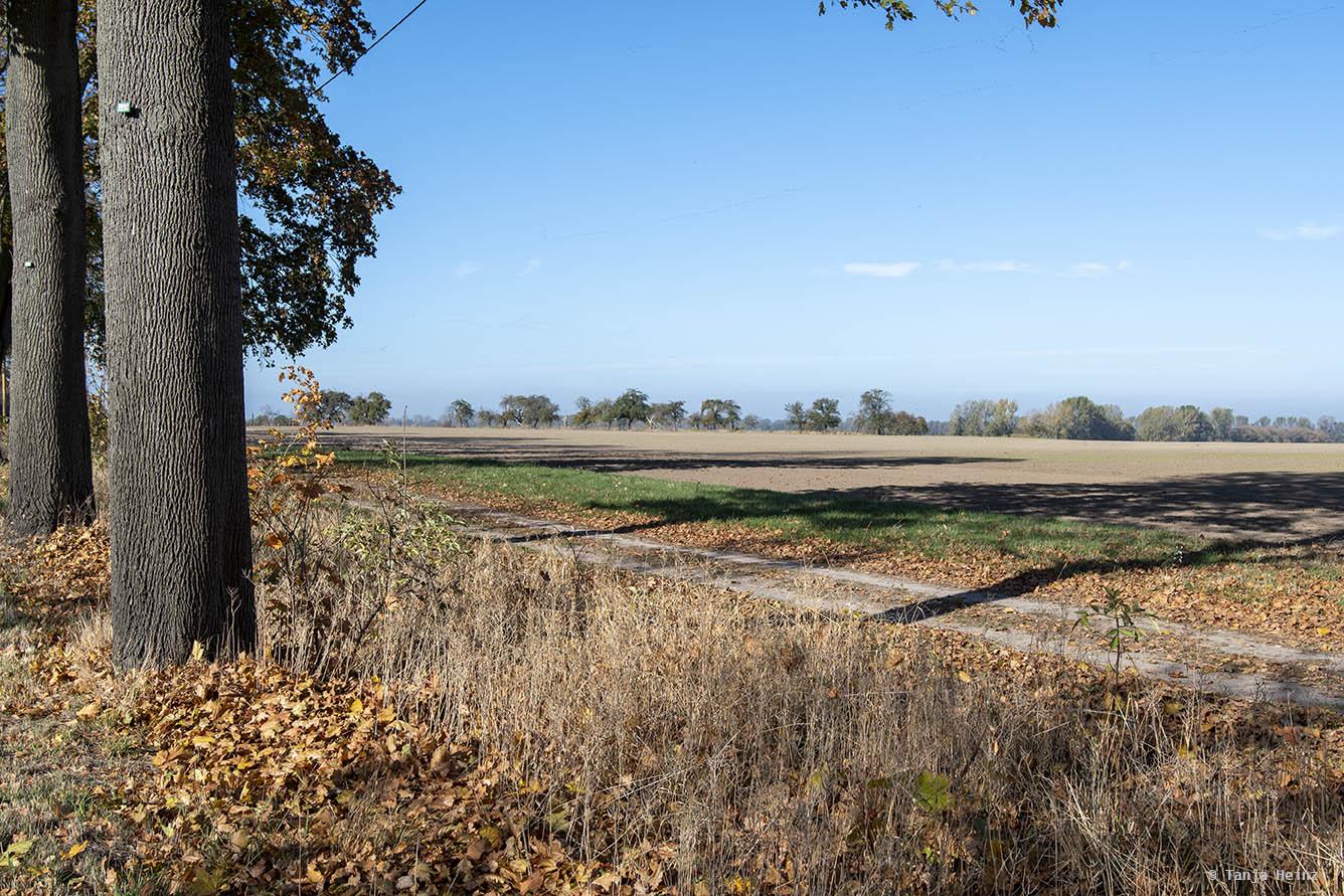 Abgeerntetes Getreidefeld in Brandenburg