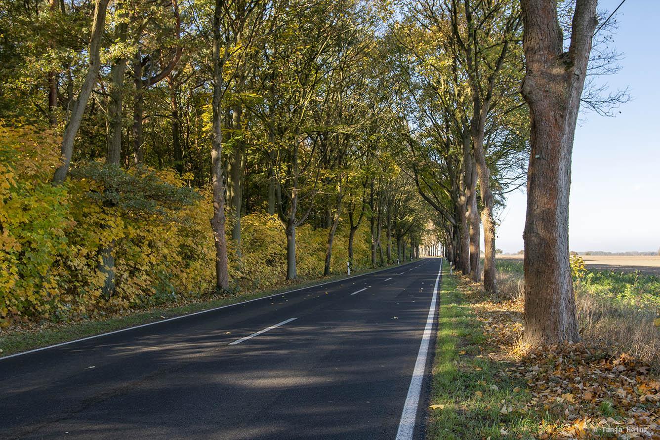 Straße zwischen Kremmen und Linum