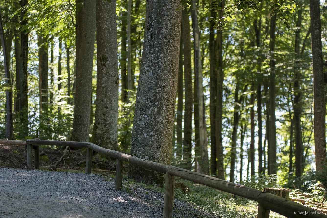 forest on the Affenberg Salem