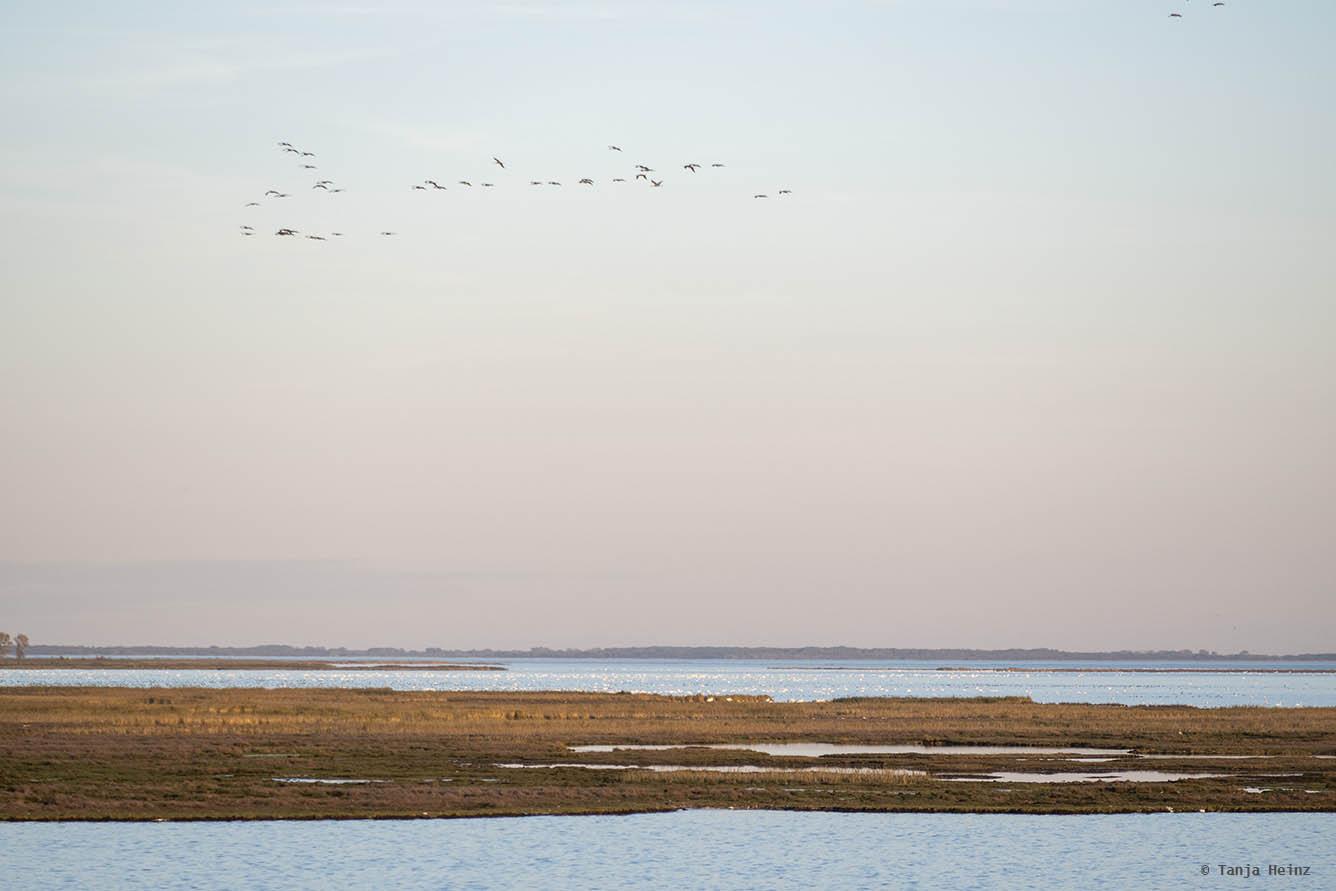 Cranes in their roosting sites