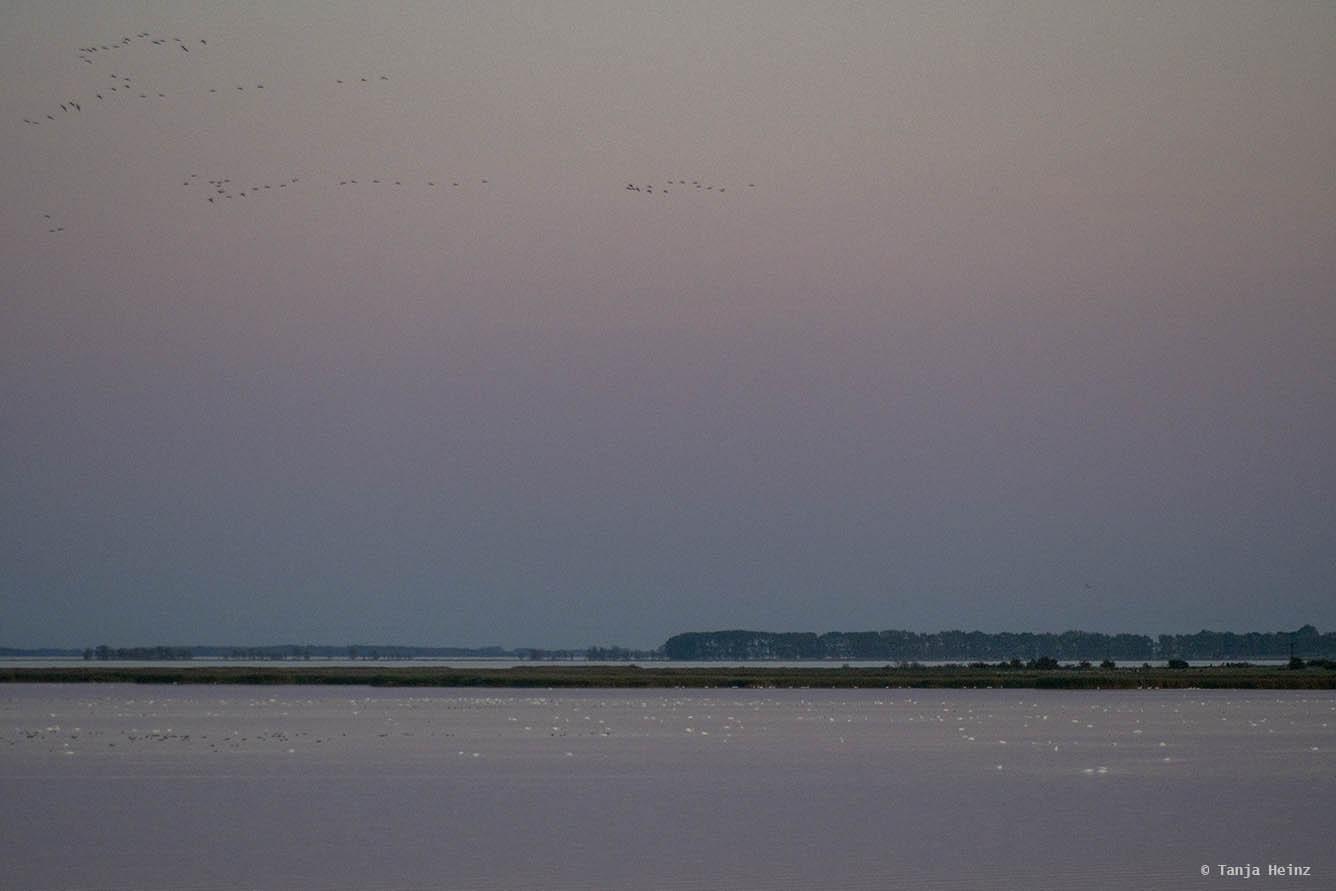 Bodden auf Fischland-Darß-Zingst