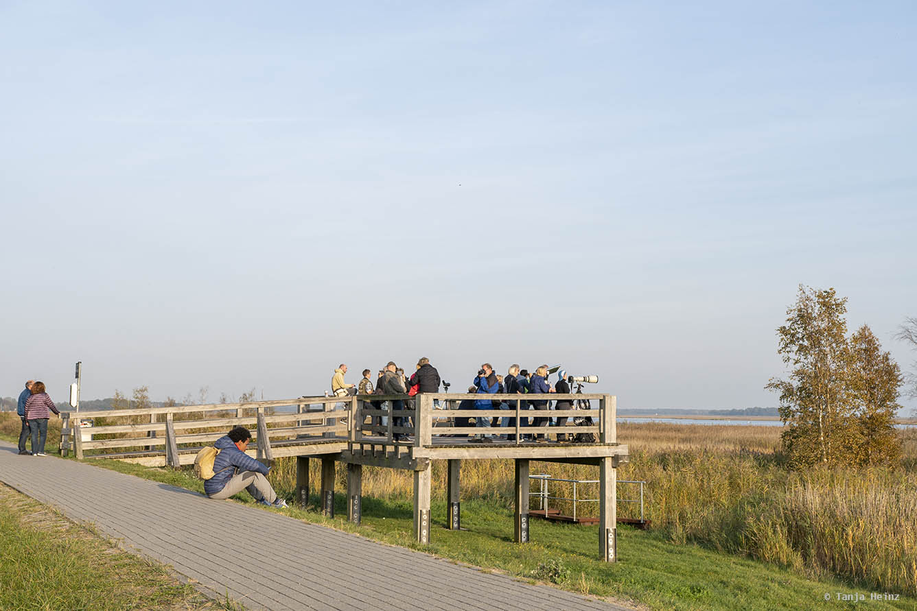 Kranichbeobachtung an Land in Zingst