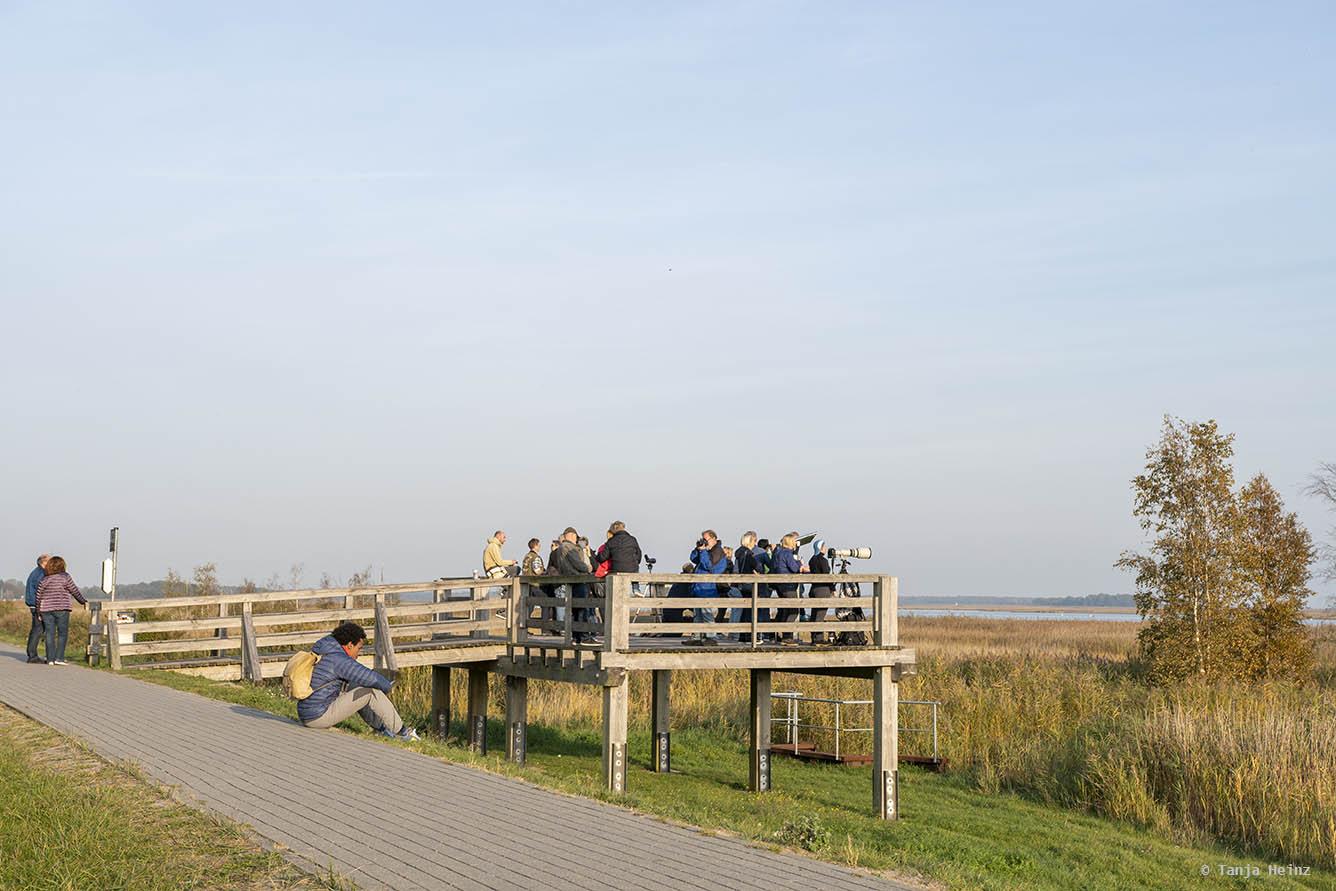 Land-based crane observation in Zingst