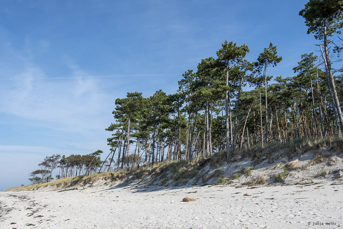 Forest at the Weststrand