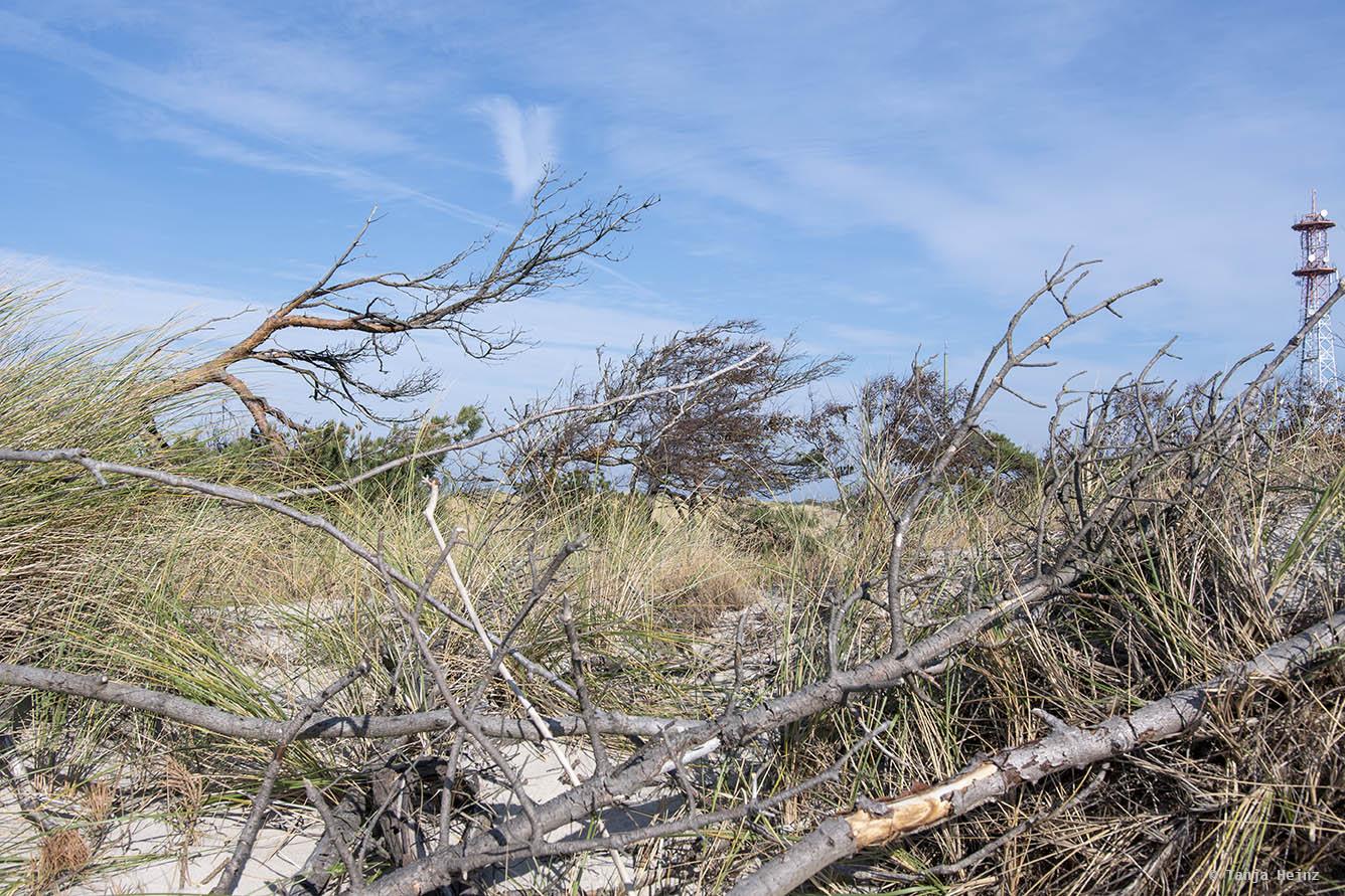Weststrand auf Fischland-Darß-Zingst