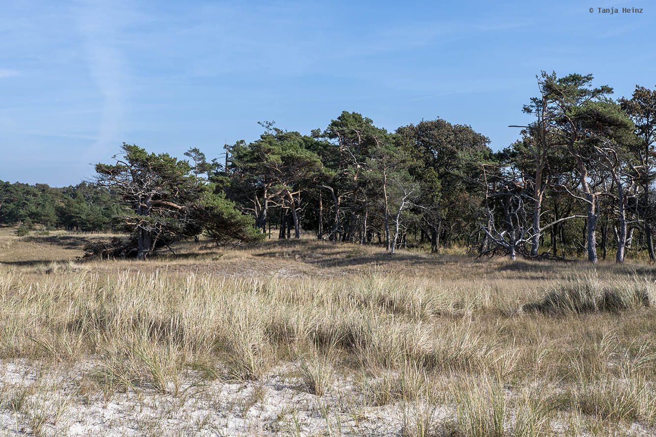 Wald am Weststrand