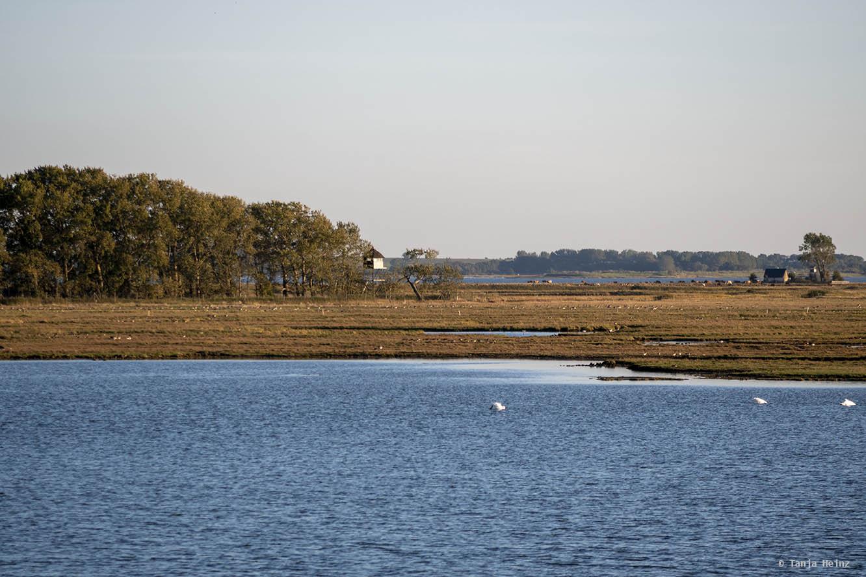 Landschaft auf Fischland-Darß-Zingst