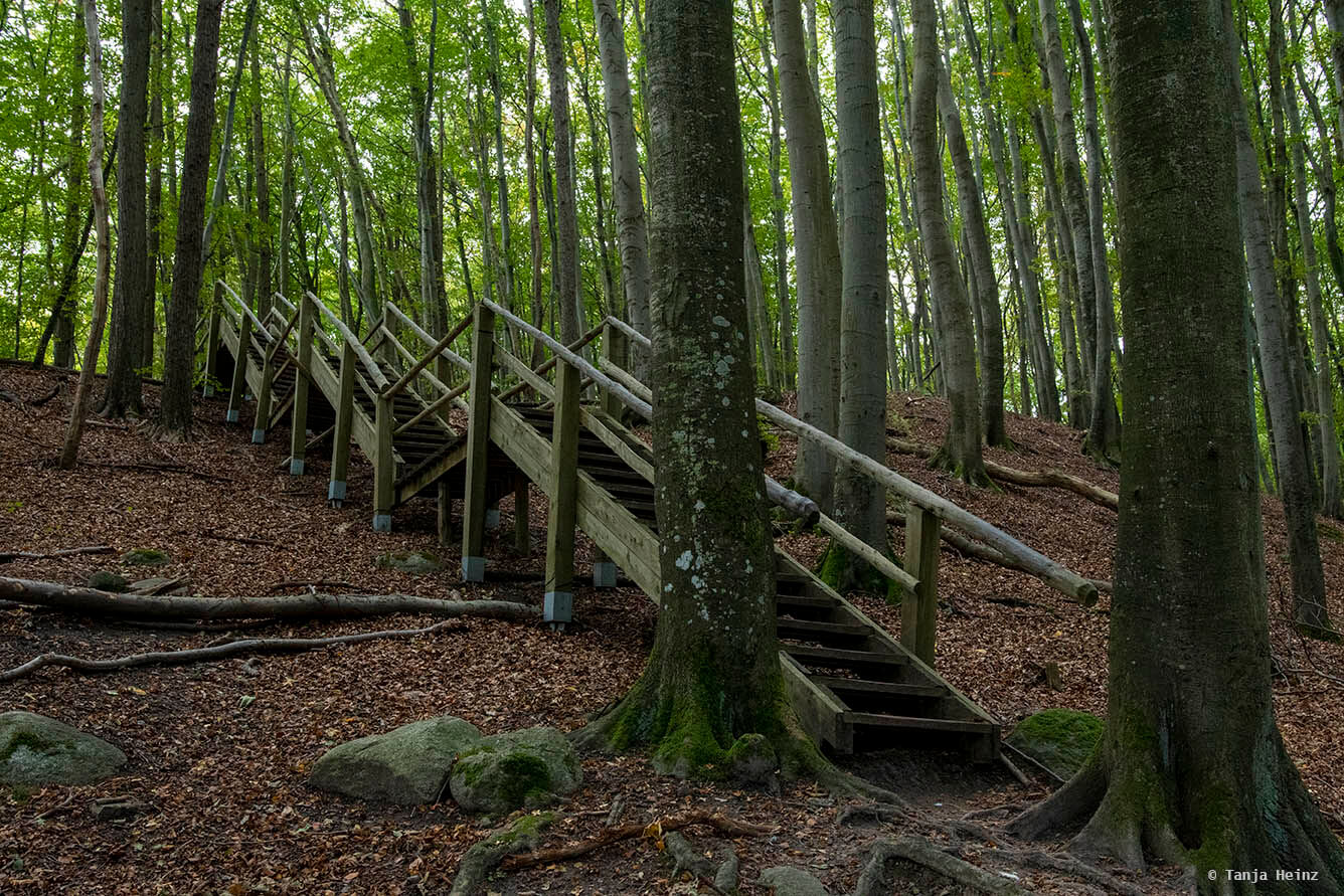 Stairs in the beech forests