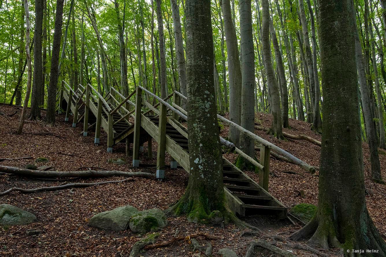 Treppen in den Buchenwälder