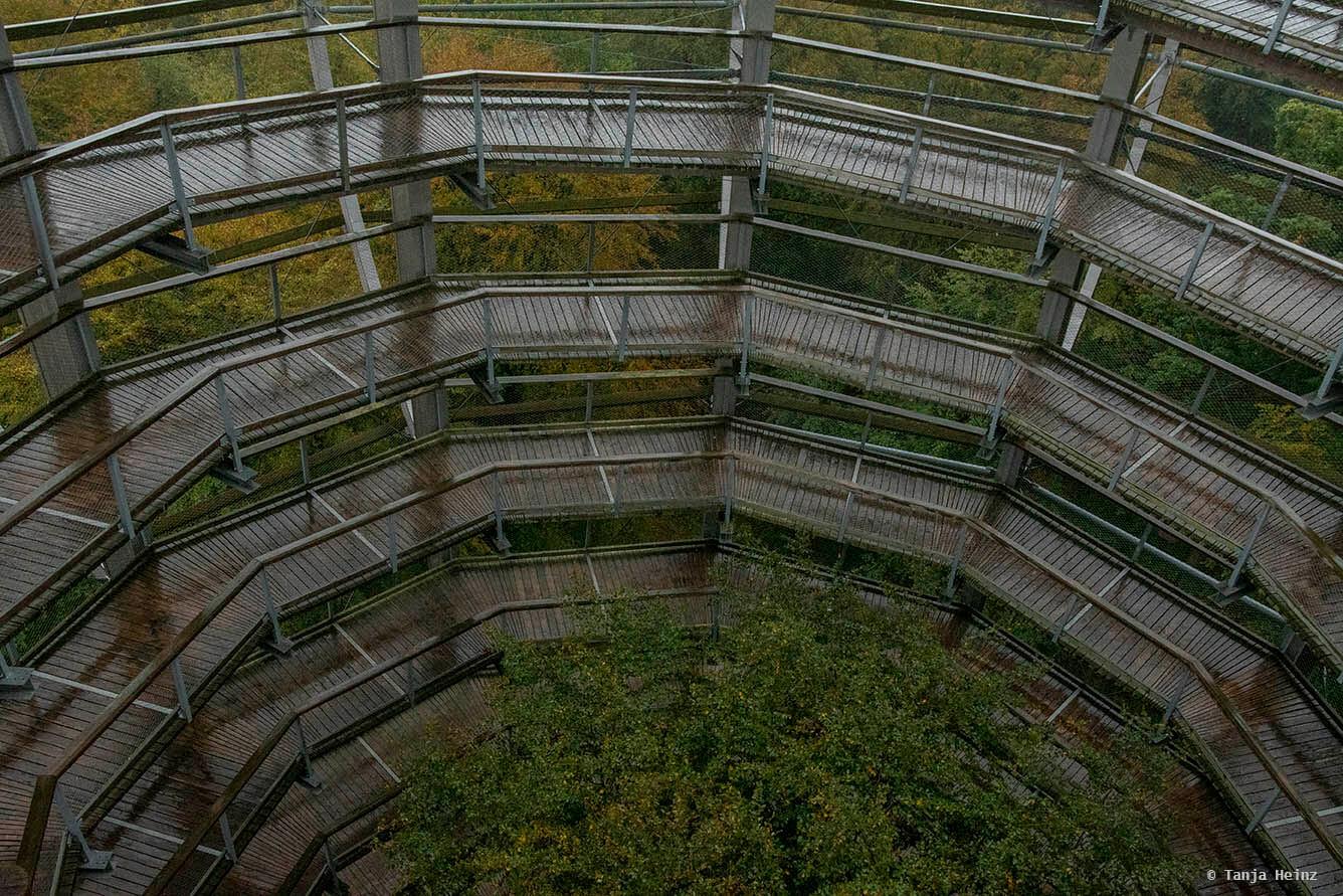 Baumwipfelpfad auf Rügen