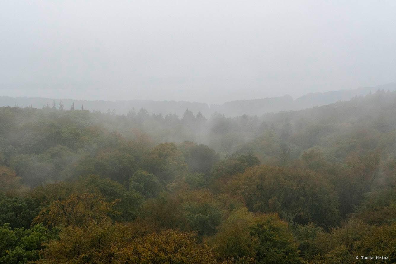 Buchenwälder auf Rügen