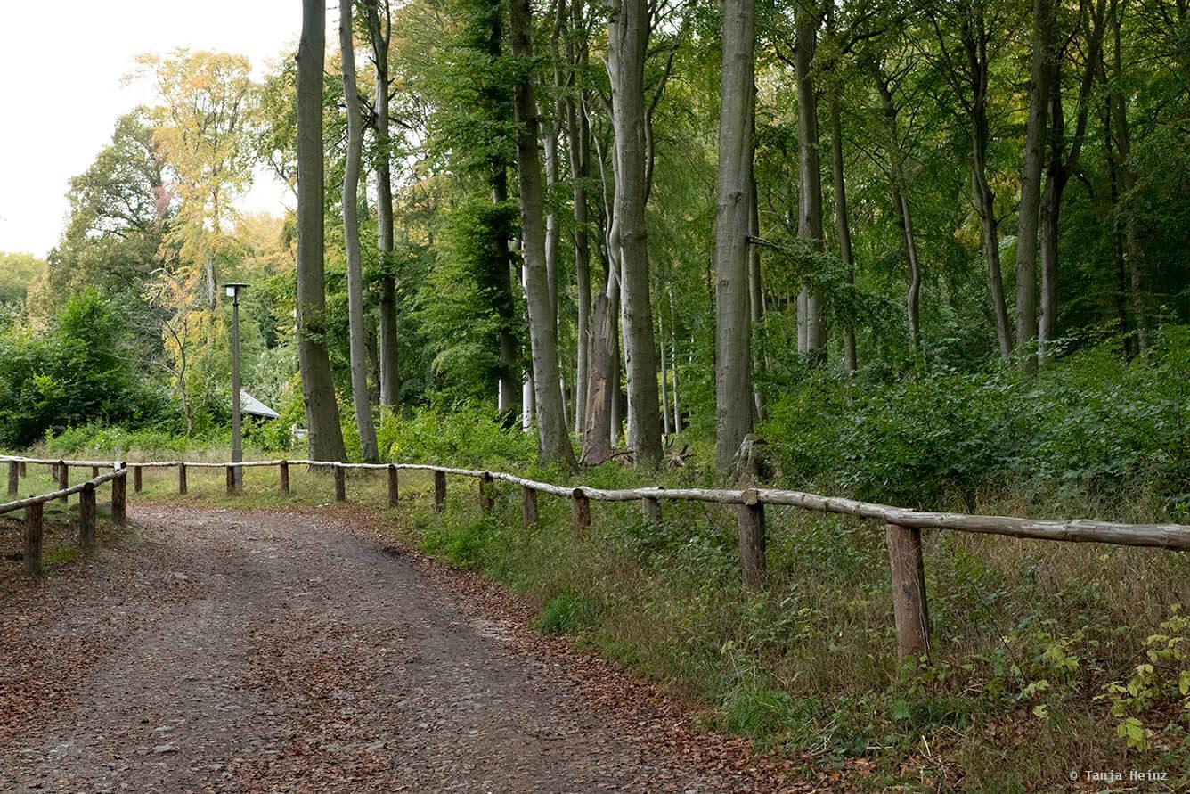 Eingang zu den Buchenwälder