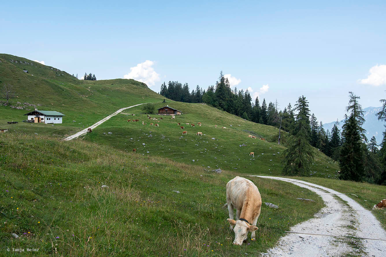 Weg in der Nähe der Königsbachalm
