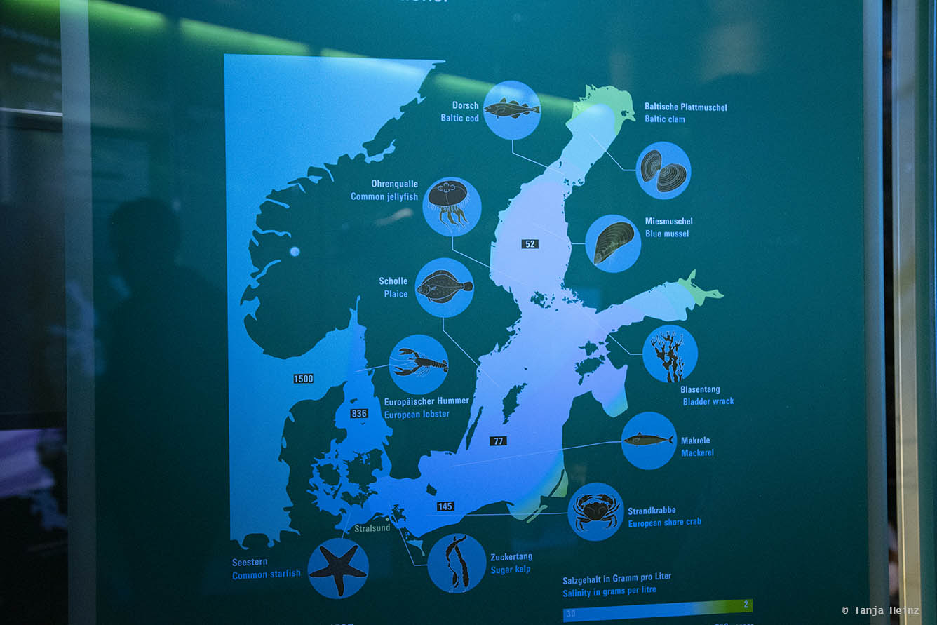 Salzwassergehalt in der Ostsee