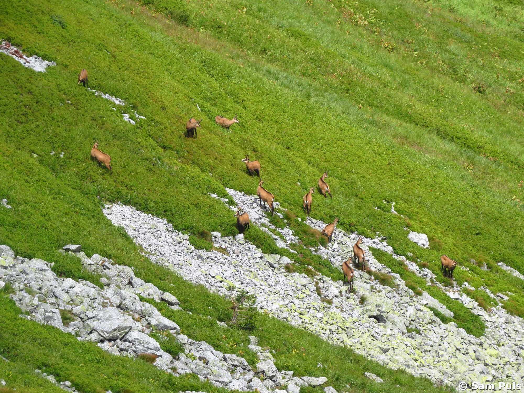Tiere beobachten in der Hohen Tatra