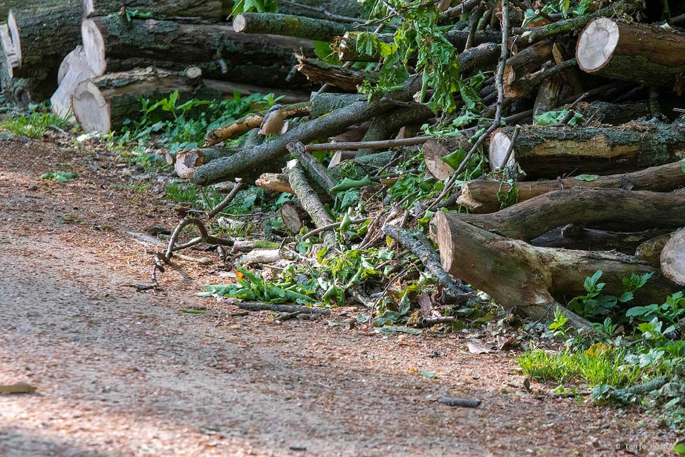Krähen im Tiergarten