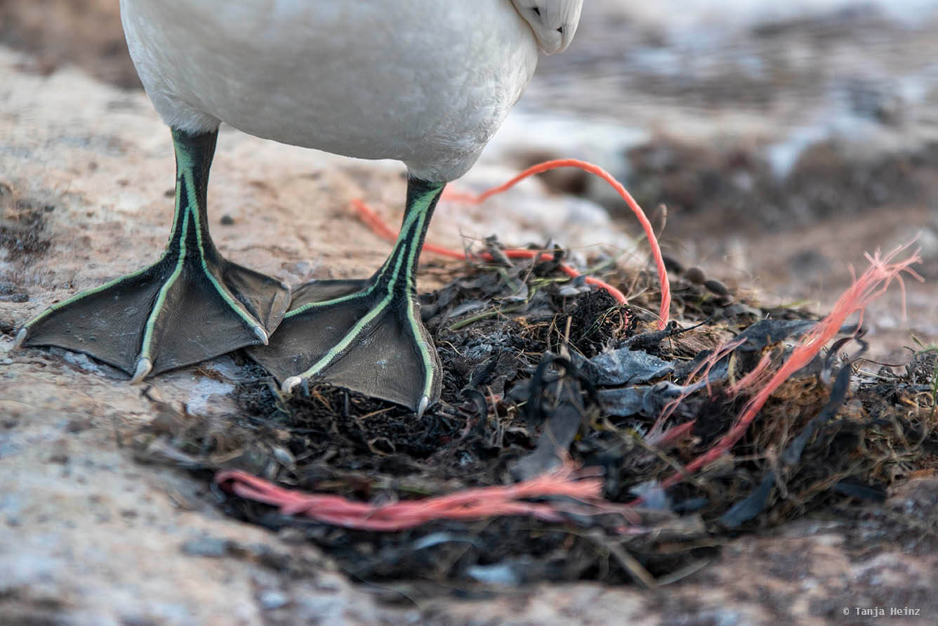 plastics on Heligoland