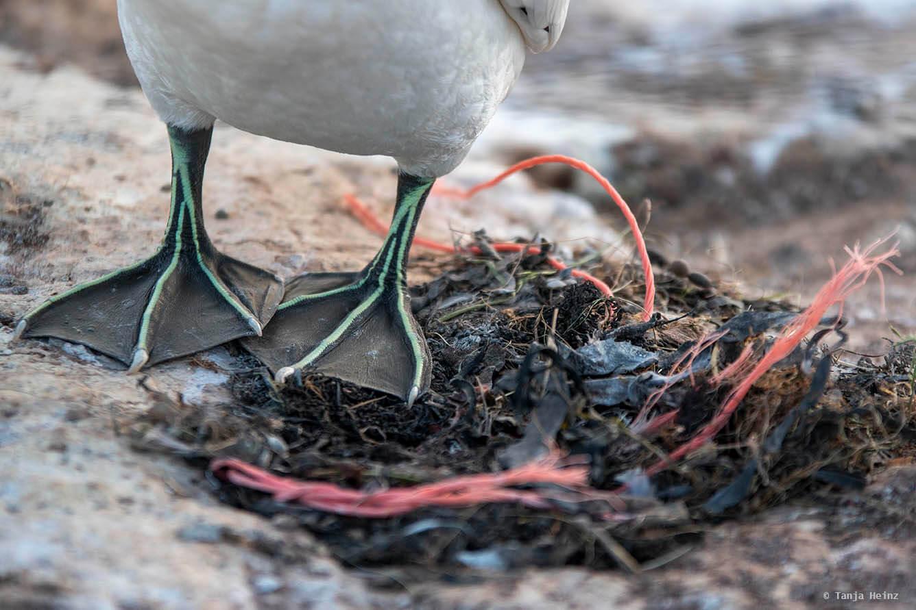 Plastikverschmutzung auf Helgoland