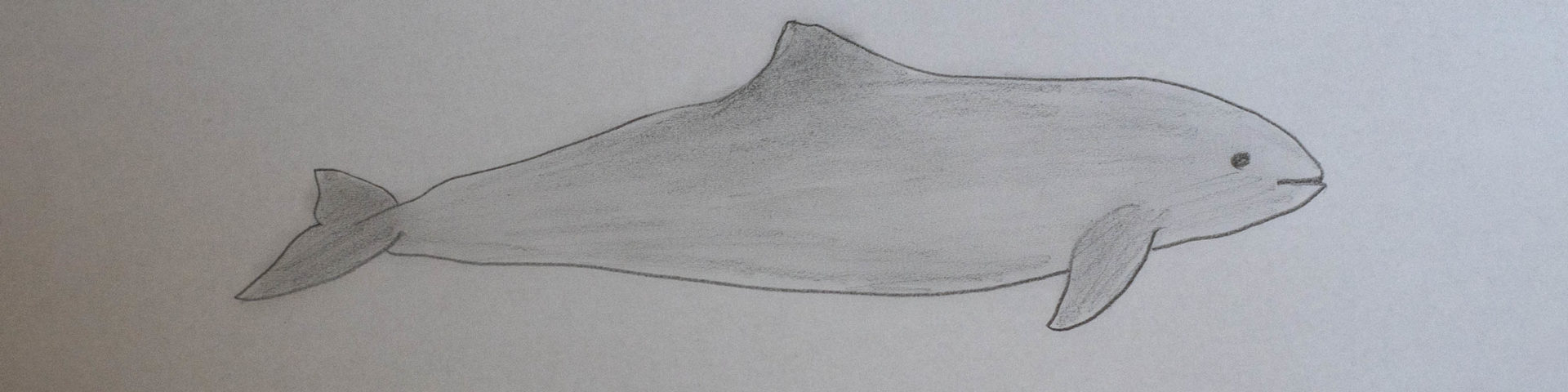 Schweinswale in der Ostsee