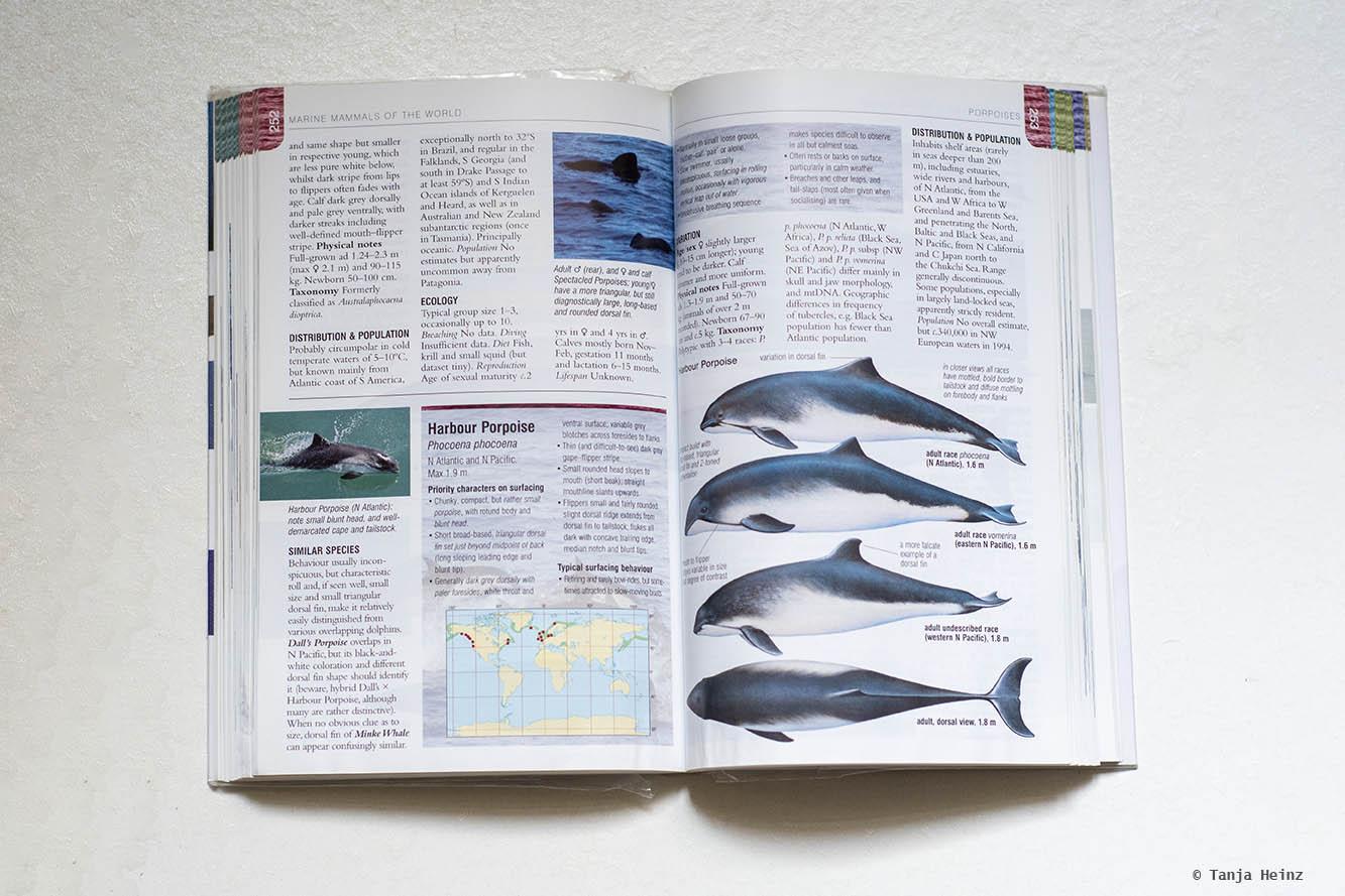 Buch über Wale und Delfine
