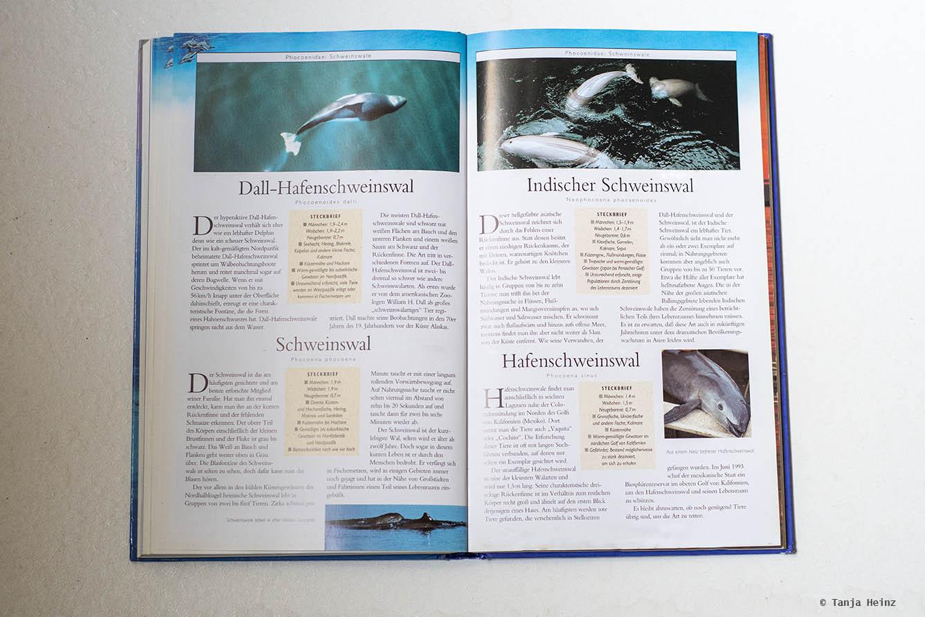 Harbor porpoises in the Baltic Sea