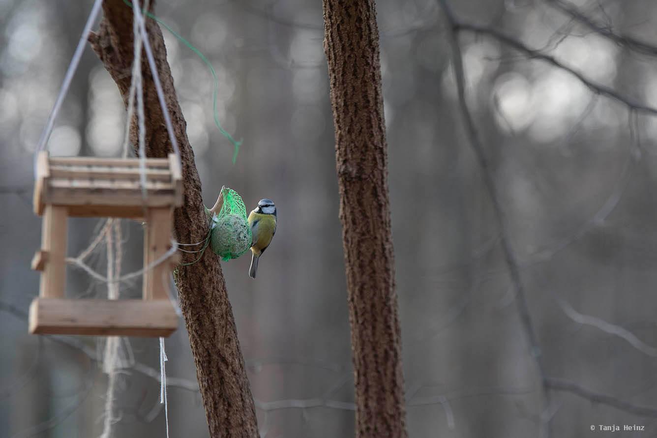 Stunde der Wintervögel 2021