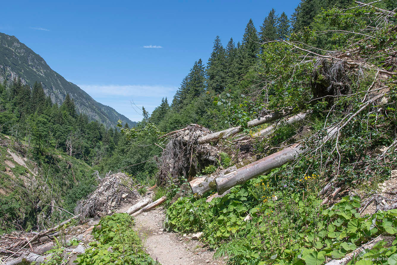 Trail to the Kemptner Hütte