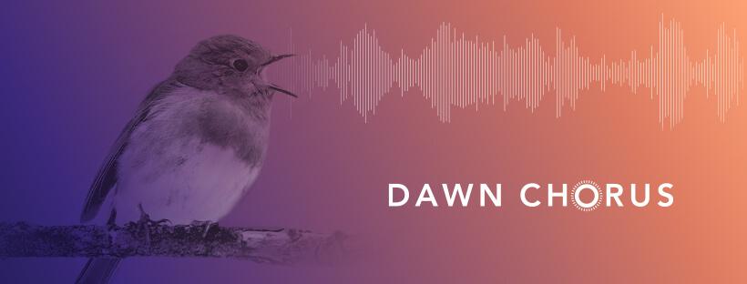 dawn chorus 2021