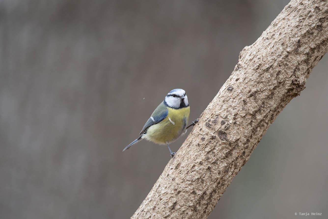 Stunde der Gartenvögel 2021